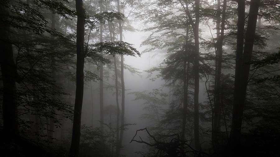 лес туман