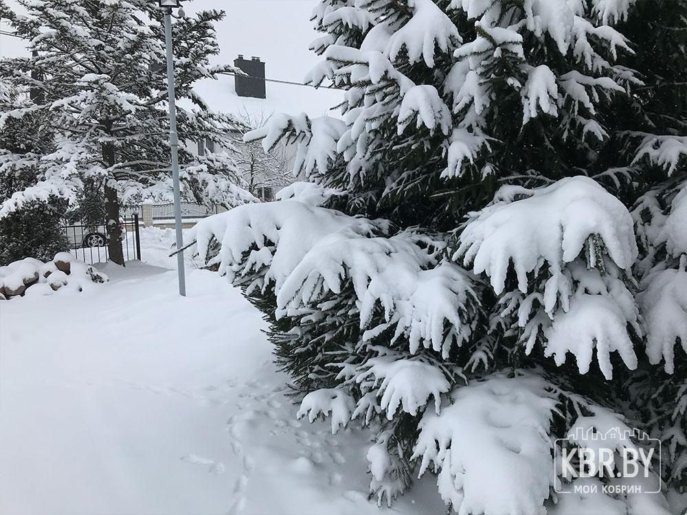 Зима снег елка